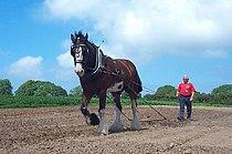 Dyfed Shire Horse Farm - geograph.org.uk - 13986.jpg