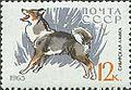 East-Siberian-Laika-Canis-lupus-familiaris.jpg