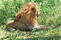 Eastern Serengeti 2012 06 01 3489 (7522710262).jpg