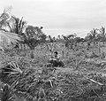 Een arbeider plant een jonge kokospalm in de palmentuin in Coronie, Bestanddeelnr 252-5663.jpg
