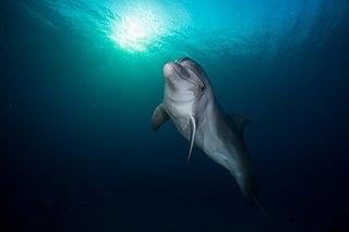 Eilat Dolphin Reef (3).jpg