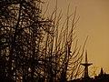 Elblag, Poland - panoramio (14).jpg