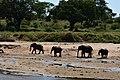Elephants, Tarangire National Park (3) (28088278053).jpg