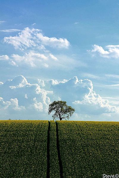 «Il n'y a jamais un sommet d'où la vue ne soit pas belle.» de Sylvain Tesson