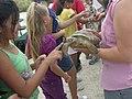 Endangered desert tortoise (6173023005).jpg