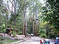 Entrada para o bosque - panoramio.jpg