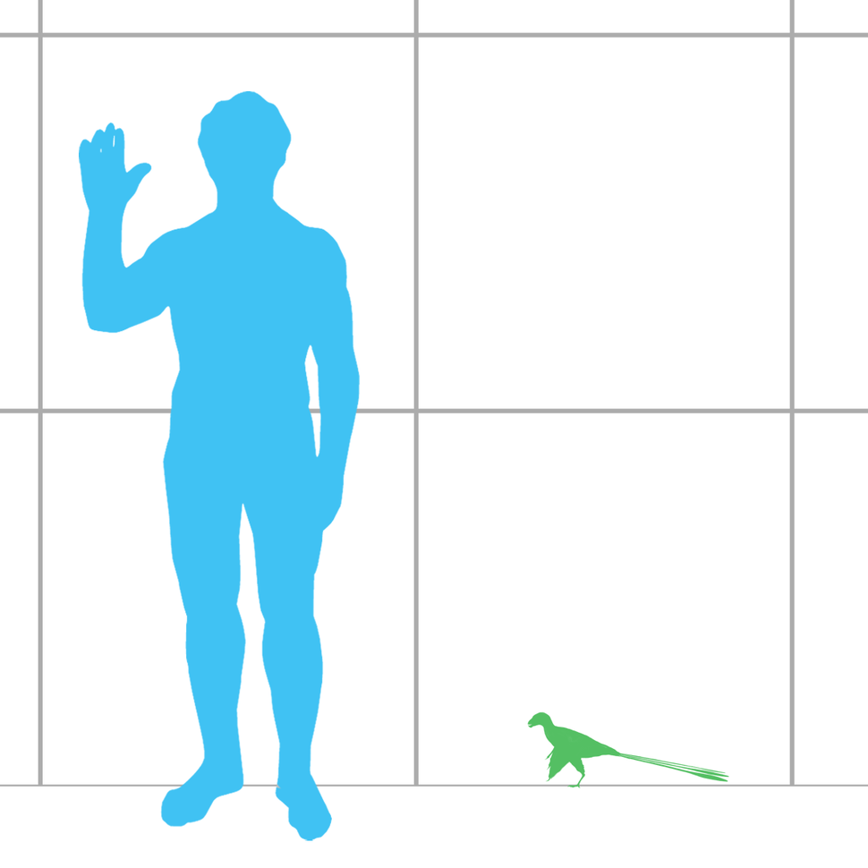 Epidexipteryx scale