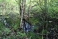 Erlenbruch Langwiesenholz 10.jpg