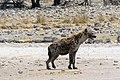 Etosha National Park, Namibia (17038683200).jpg