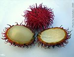 Exotic Fruit-Rambutans005.JPG