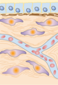 Extracellular Matrix v1.001-UNlabeled.png