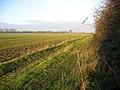 Farmland, Midfield, Oakington, Cambs - geograph.org.uk - 89385.jpg