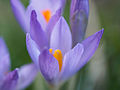 February flowers (12312184005).jpg