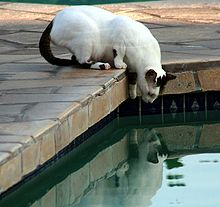 Feral cat at the pool.JPG