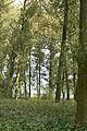 Feuchtgebiet bei Vlodrop III.jpg