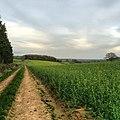 Field - panoramio (38).jpg