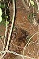 Field Trip Marottichal after Kerala Flood 2018 Soil Piping IMG 9103.jpg