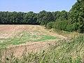 Field boundary near Poutty Wood - geograph.org.uk - 949229.jpg