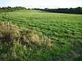 Field near Blackthorn Hill - geograph.org.uk - 61234.jpg