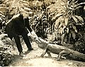 Film producer David Wark Griffith (SAYRE 3750).jpg