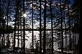 Finland 2017-02-25 (33083484651).jpg