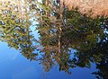 Five Mile Lake water reflection.jpg