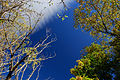 Flickr - JennyHuang - Tree and sky in New Zealand (3).jpg