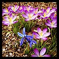 Flickr - USCapitol - Spring at the Capitol grounds..jpg