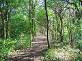 Flickr - ronsaunders47 - FOREST WALKWAY. WARRINGTON UK..jpg
