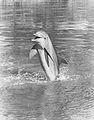 Flipper The Dolphin 1968.jpg