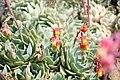 Flora de la Isla Sur-Nueva Zelanda11.JPG