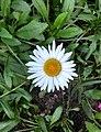 Flores de Guaramiranga CE - White 2.jpg