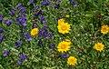 Flores silvestres .jpg
