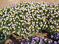 Flower-center142435.jpg
