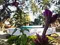 Flower 18 HDR.jpg