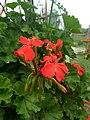 Flower 4 HDR.jpg