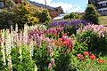 Flower garden in Ushuaia (5543010755).jpg