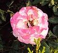 Flowers - Uncategorised Garden plants 288.JPG