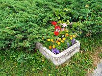 200px-Flowers_Tatranske_Zruby_0131.jpg