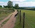Footpath at Kinver Edge, Staffordshire - geograph.org.uk - 848000.jpg