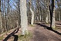 Forêt Départementale de Beauplan à Saint-Rémy-lès-Chevreuse le 14 mars 2018 - 22.jpg