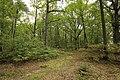Forêt Départementale de Méridon à Chevreuse le 29 septembre 2017 - 11.jpg