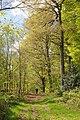 Forêt domaniale de Desvres Sentier GR.jpg