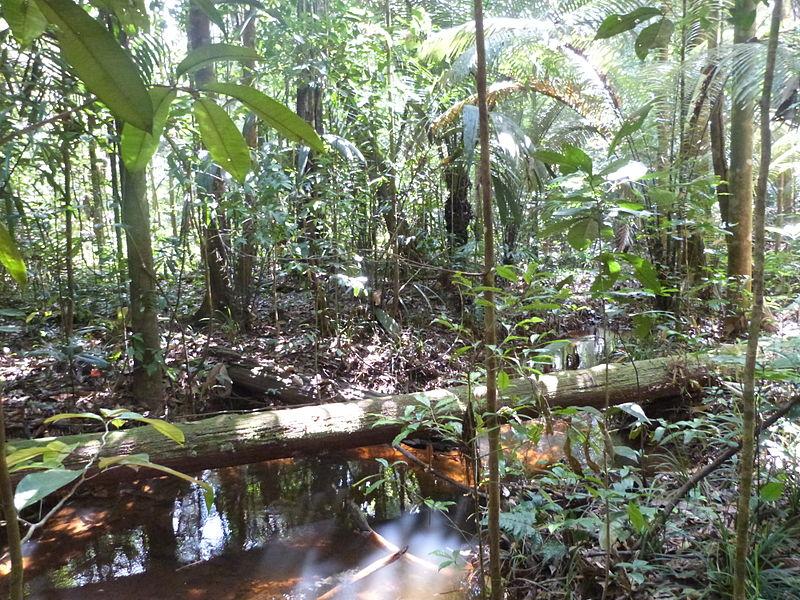 Fichier:Forêt tropicale 1.JPG