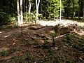 ForestcastleVelkySaris13Slovakia1.JPG