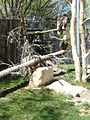 ForestryFarmbaldEagle.jpg