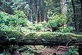 Forrester Island Wilderness.jpg