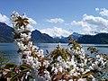 Frühling am Vierwaldstätter See.jpg