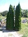 Friedhofskreuz, Végardó, 2020 Sárospatak.jpg