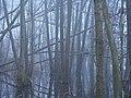 Frozen Teufelsbruch swamp next to crossing path 3.jpg